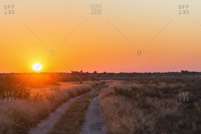 Piste at sunrise, Central Kalahari Game Reserve, Kalahari, Botswana