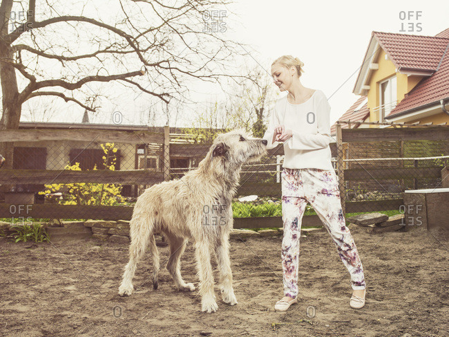 Woman feeding Irish Wolfhound
