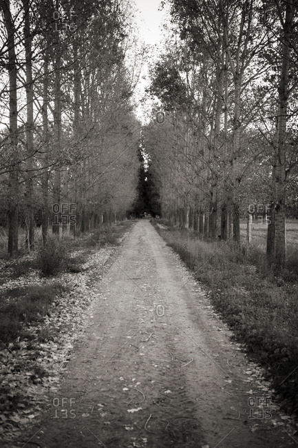 Dirt road lined with trees in Argentina