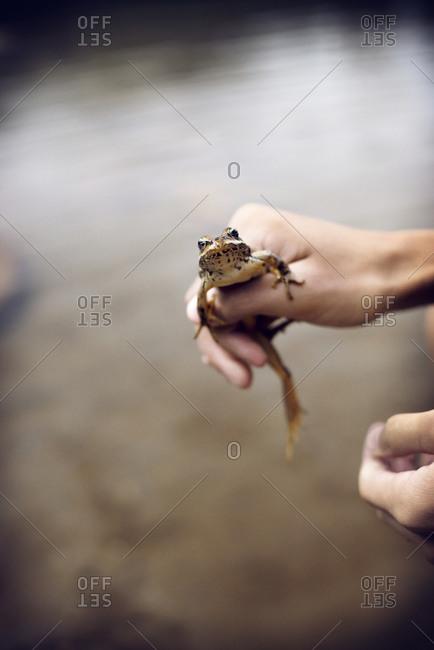 Catching frogs at Sunrise Lake in Mt Rainier National Park, Washington