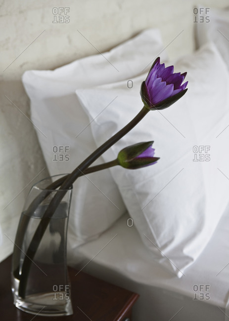 Lotus Flowers In A Glass Vase Next To The Bed In Luxury Hotel Stock