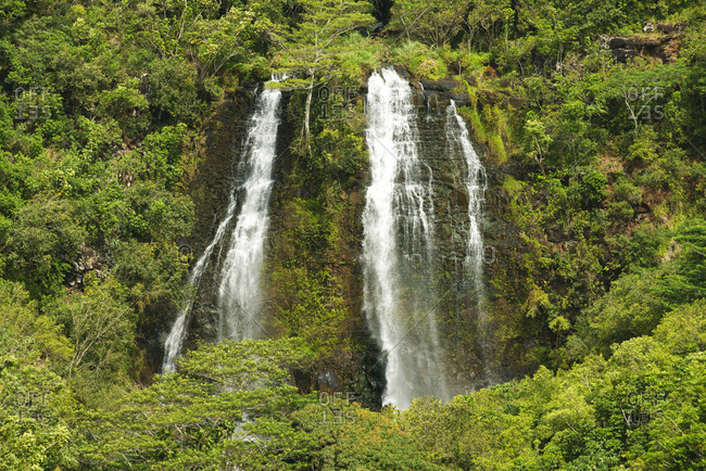 A waterfall flowing through dense foliage
