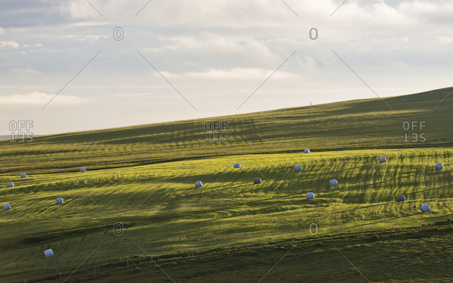 A green field with hay barrels
