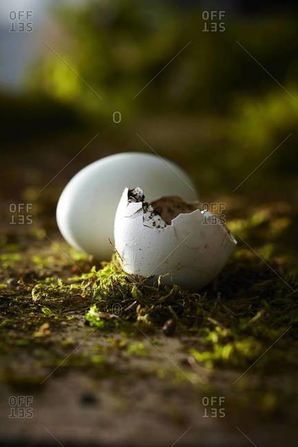 One whole white egg and one broken egg shell on dirt and moss