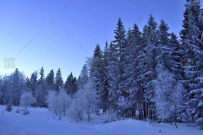 Landscape of forest in winter by moonlight at night, bavarian forest, Bavaria, Germany