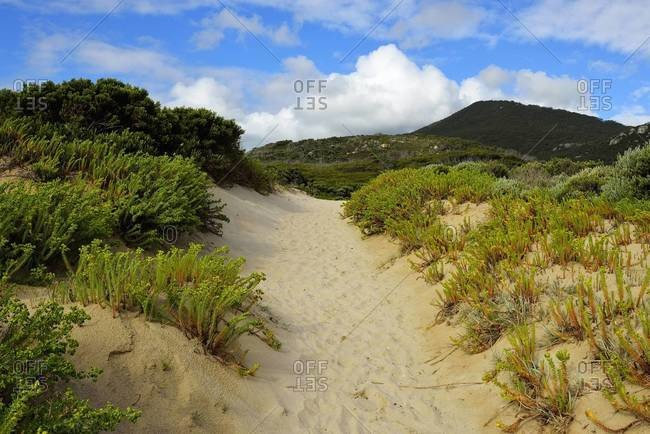 Sandy Path to Beach, Picnic Bay, Wilsons Promontory National Park, Victoria, Australia