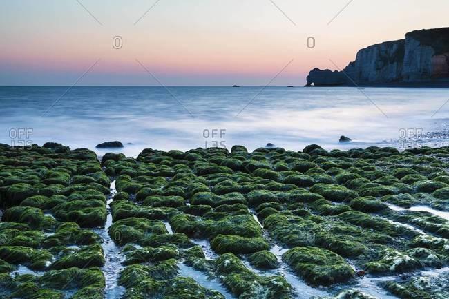 Green kelp on rocky beach, Porte d'Aval at Dawn, Cote d'Albatre, Pays de Caux, Seine-Maritime, Haute-Normandie, France
