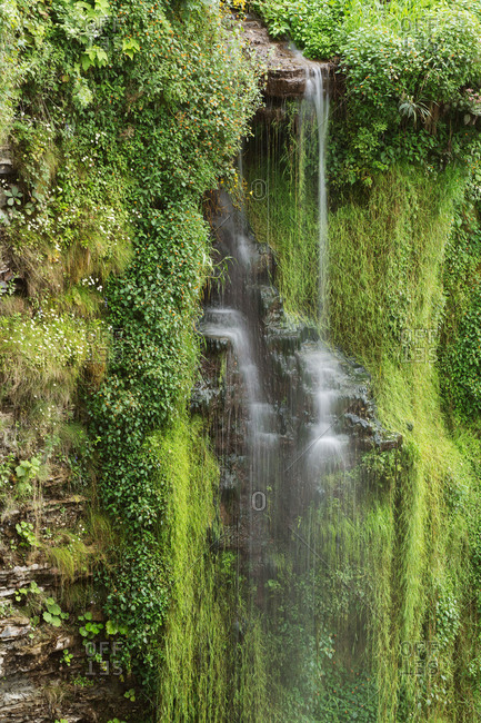 Cascade running over a verdant cliff