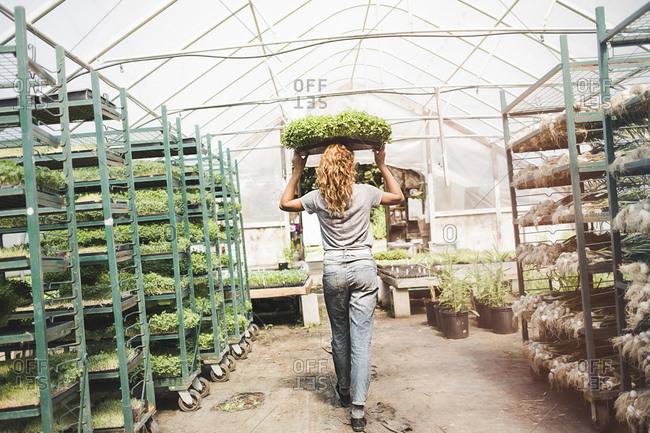 A woman balances a tray of microgreens
