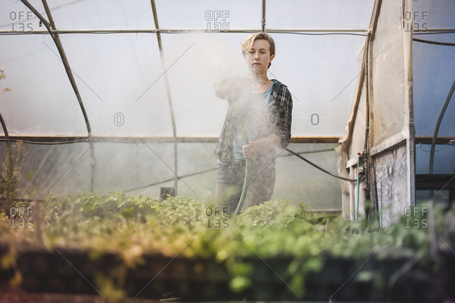 A woman waters microgreens in a greenhouse