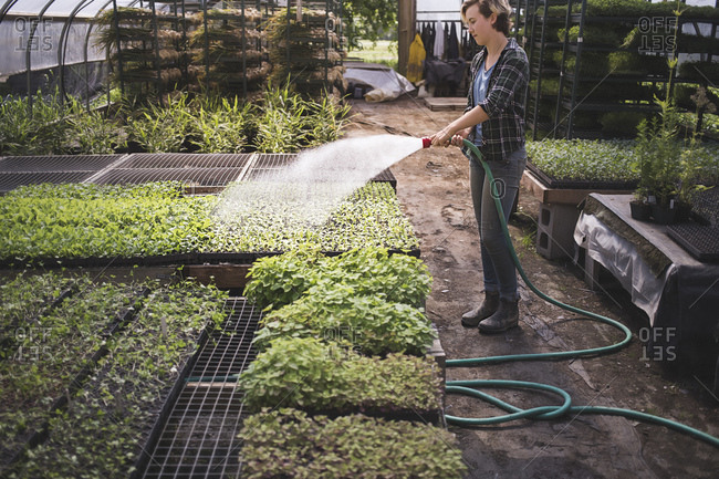 A woman waters microgreens in an indoor farm