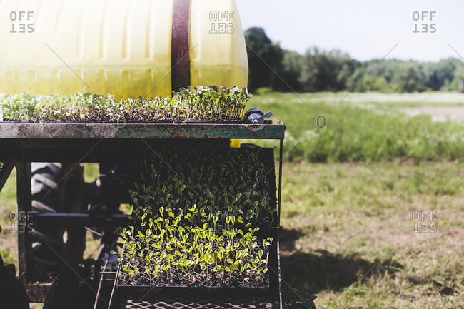 Seedlings on the back of a trailer