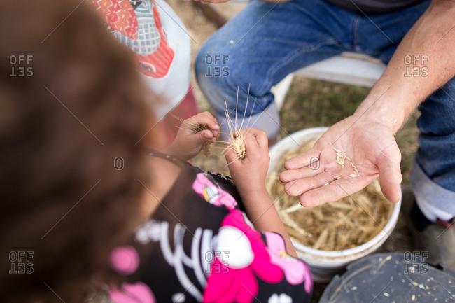 Man showing girl handful of wheat grain