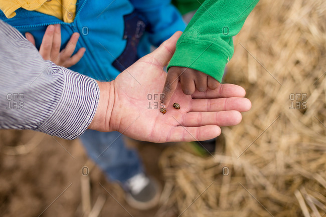Man showing kids pest insects in field