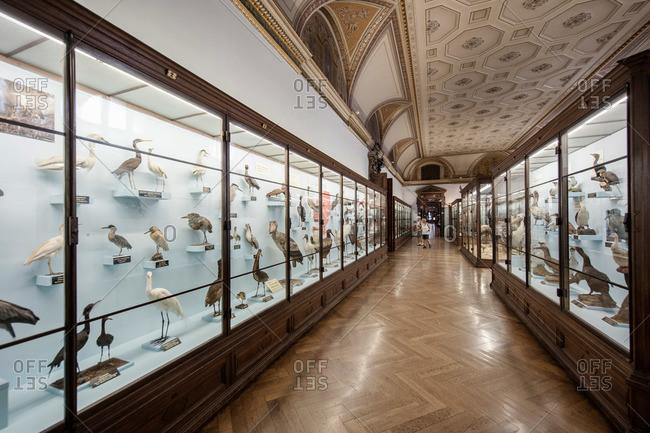 Vienna, Austria - June 8, 2012: Gallery containing bird specimens in the Natural History Museum in Vienna
