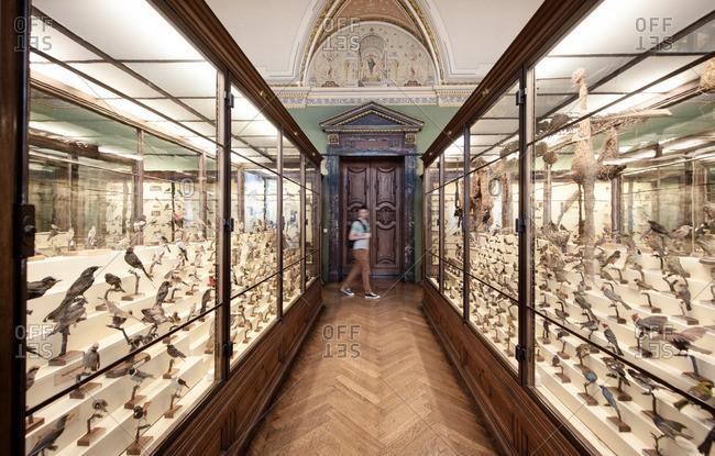 Vienna, Austria - June 8, 2012: Person walking past songbird exhibit at Natural History Museum in Vienna