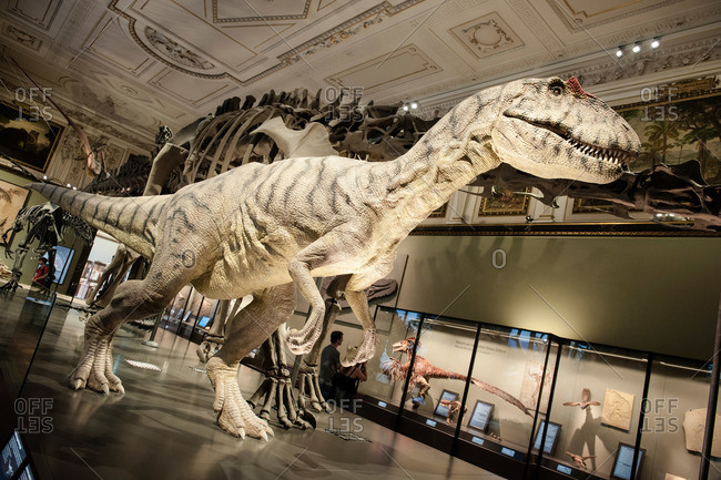 Vienna, Austria - June 8, 2012: Dinosaur exhibit in the Natural History Museum in Vienna