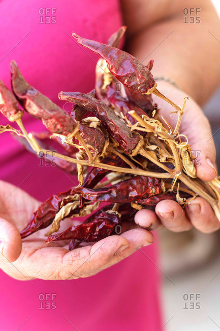 Person holding dried hot chili peppers