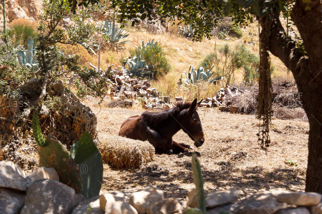 Mule resting amongst cactus and succulent plants