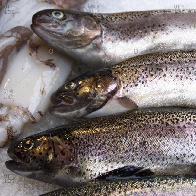 Fresh trout in Rialto Market, Venice, Italy