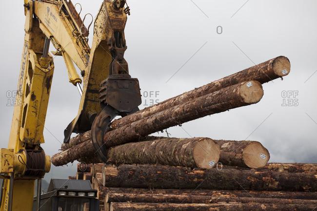 Forwarder Loading Logs Harvested At Chiniak Onto A Logging Truck, Kodiak Island, Southwest Alaska, Autumn