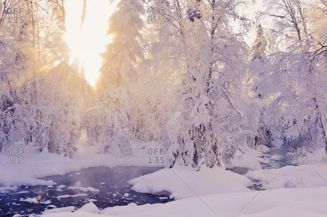 Small stream in a hoar frost covered forest with rays of sun filtering through the fog in the background Russian Jack Springs Park, Anchorage, Alaska, United States Of America