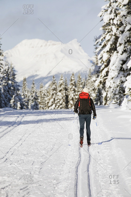 A female cross country skier on a track with snow covered evergreen trees and mountains in the background with blue sky, Lake Louise, Alberta, Canada