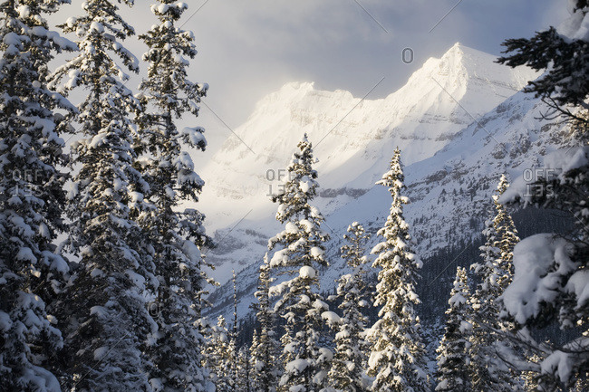 Sunlit snow covered mountain peaks with snow covered evergreen trees and misty clouds, Lake Louise, Alberta, Canada