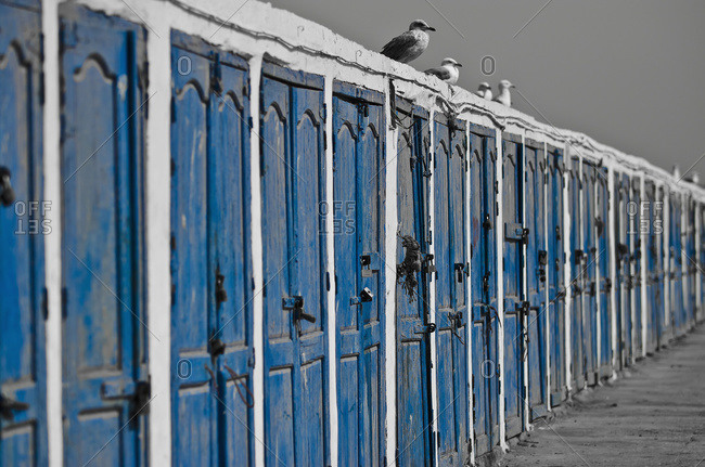 Birds sit on top of a long wall of weathered blue wooden doors, Essaouira, Morocco