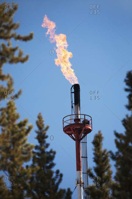 Close up of gas plant flare framed by evergreen trees with blue sky and black smoke, Bragg Creek, Alberta, Canada