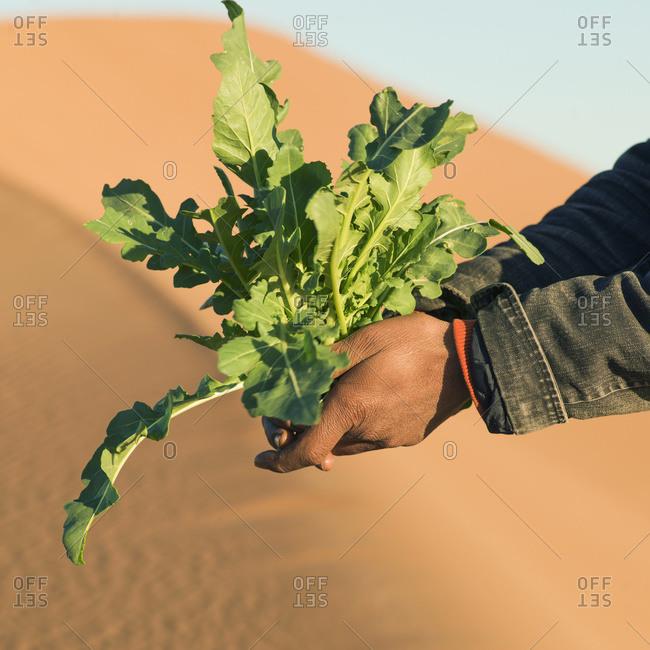 A woman holding a plant at the erg chegaga dunes, Souss-massa-draa, Morocco