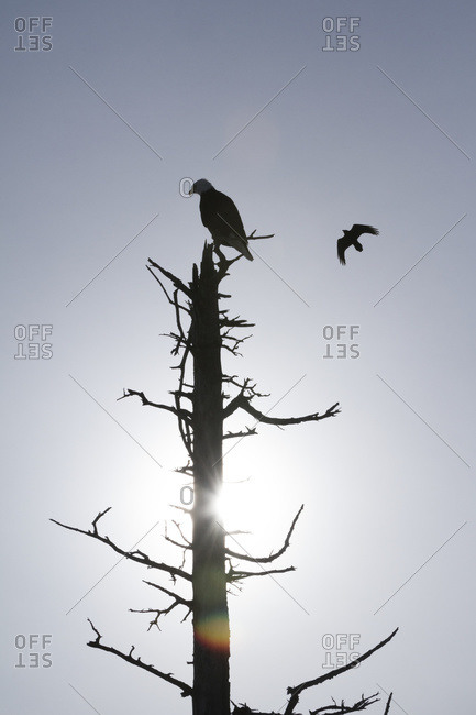 Silhouette of birds and a dead tree against a blue sky and sun flare
