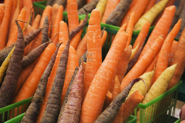 Green plastic baskets with freshly picked organic carrots (Daucus carota) for sale at an outdoor market, Byward Market, Ottawa, Ontario, Canada
