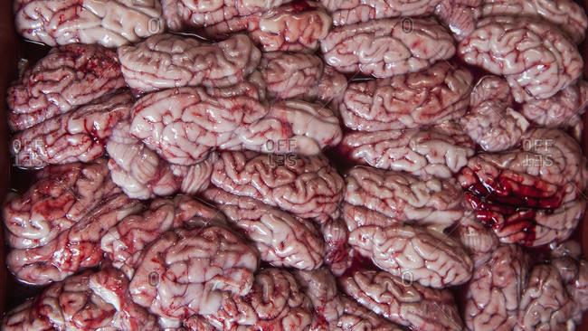 Brains for sale at a market, Phnom Penh, Cambodia