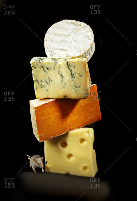 A mouse creeps around cheese