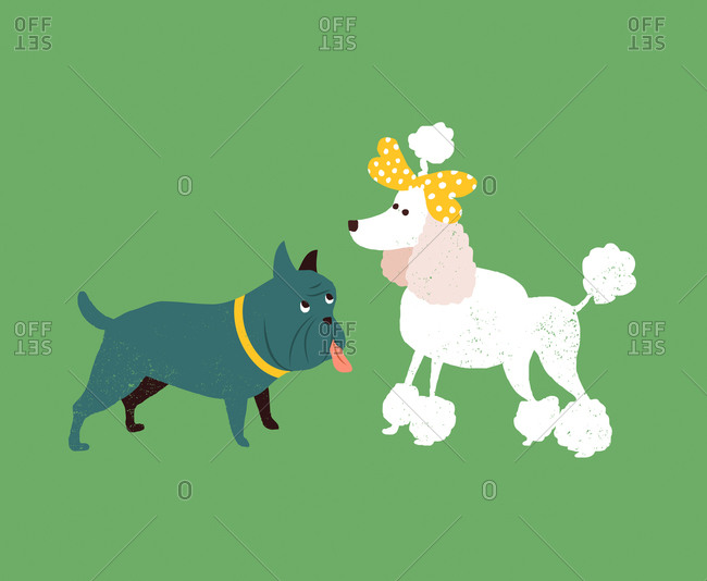 An illustration of a bull terrier and poodle