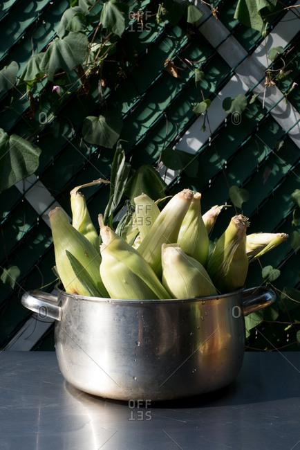 Pot of fresh corn on table outside