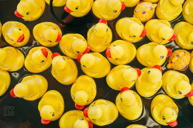 Rubber ducks at a carnival fairway game