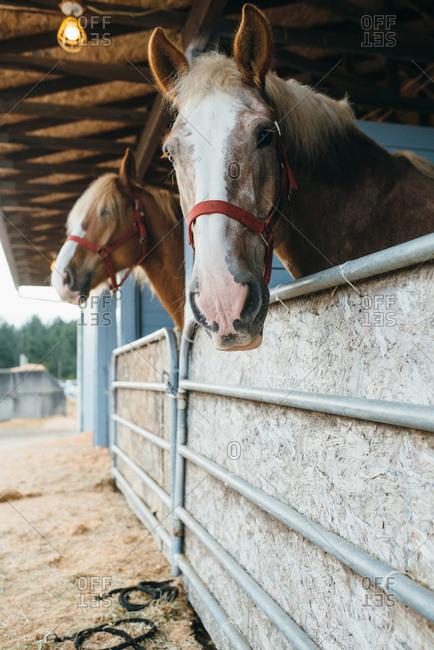 Horse stalls at a fair