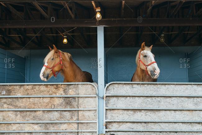 Horse stalls at a carnival