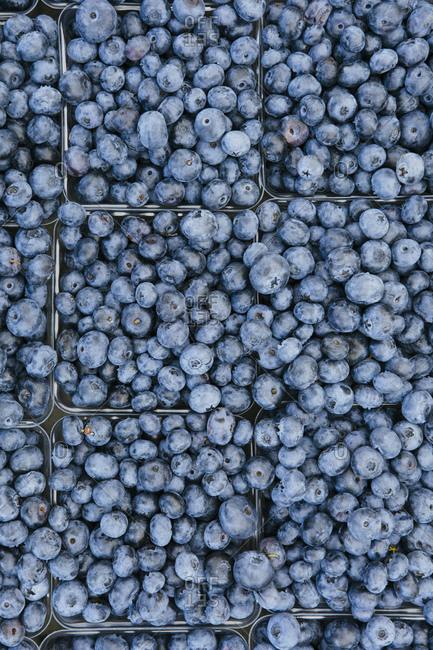 Overhead of pints of freshly picked blueberries