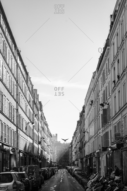 Paris city street and parked cars