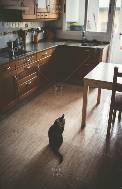 Tabby cat sitting on kitchen floor