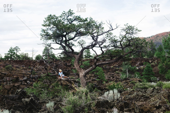 Young boy in gnarled tree in rocky desert landscape