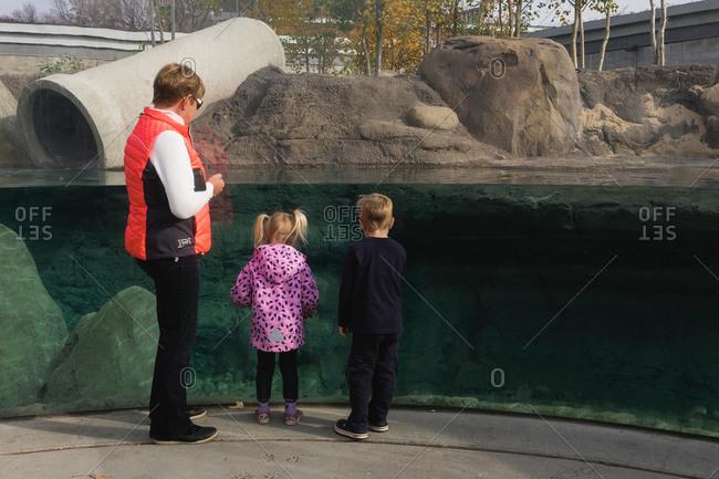 Edmonton, Canada - November 16, 2015: Edmonton, Canada - November 15, 2015: Family viewing water habitat display at Edmonton Valley Zoo