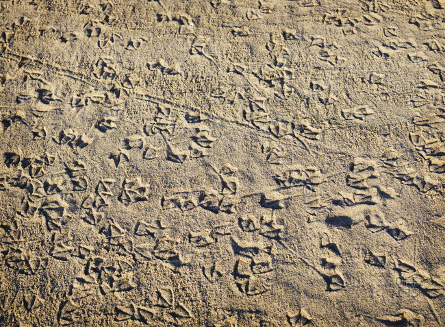 Seagull prints in the sand