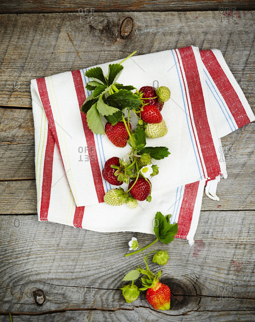 A strawberry vine on a table