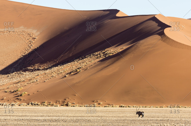 Side-lit sand dunes and Oryx
