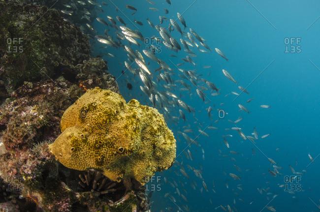 Sponge (Porifera)