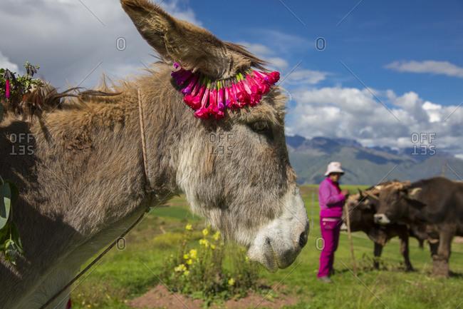 Inca terraces of Moray, Cusco Region, Peru